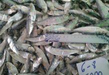cá trích khô giá bao nhiêu